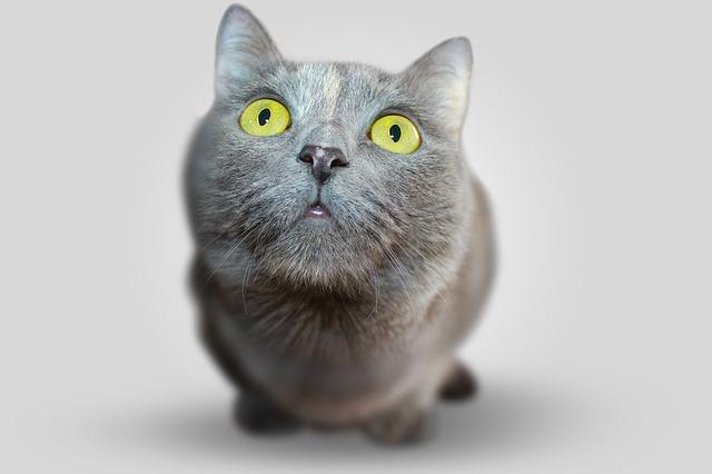 cat 351926 640 10 Dinge, die man als Katzenbesitzer lernt